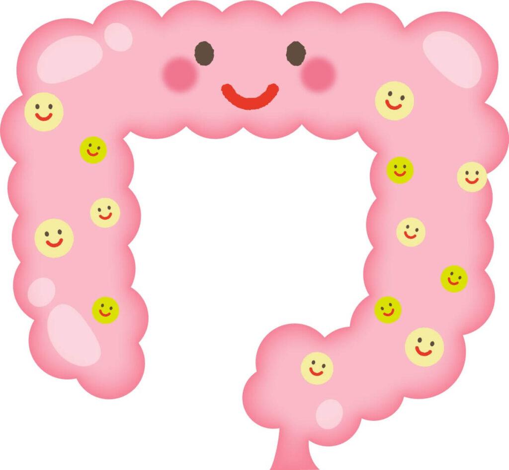 腸にフェリカス乳酸菌